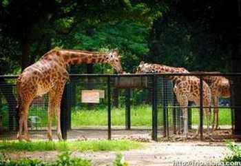 郑州| 北京动物园搬迁:北京动物园搬迁时间 系身处易