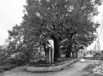 """郑州古树保护""""提速"""" 树龄80年以上被列入保护名录 - 河南一百度"""