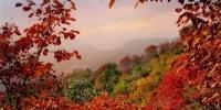 中国100家最佳赏红叶景区出炉 看看河南哪些景区上榜 - 河南一百度