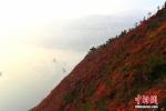 """高峡出平湖:航拍长江三峡两岸满山红叶成""""美丽画卷"""" - News.Zynews.Com"""