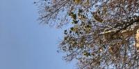 """河南今冬欠的""""雪债"""" 怕是要等明年再还了 - 河南一百度"""