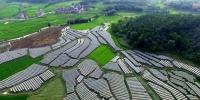 我国农村贫困人口再减1289万 - 河南频道新闻