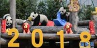 大熊猫宝宝贺新春 - 河南频道新闻