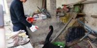 除夕夜家里来了个不速之客 村民把它转交到动物救护站 - 新浪河南