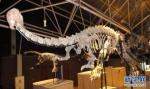 """云南禄丰发现基干蜥脚型类恐龙新属种""""孙氏彝州龙"""" - 河南频道新闻"""