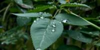 """""""山竹""""虽猛影响不到河南 秋天已到撞了一个满怀 - 河南一百度"""