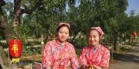 河南农民庆丰收,红枣小镇这个深藏千年的技术活儿亮了 - 河南一百度