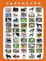 《河南省限养区内禁养犬只名录》(征求意见稿)公布:50种猛犬拟禁养,违者最高罚万元 - 河南一百度