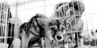 河南禁养犬种名单公布 网友:与其禁犬不如管好养犬人 - 河南频道新闻