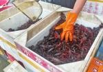 今夏郑州小龙虾批发价较去年暴跌35%左右 市场为啥跳水了? - 河南一百度