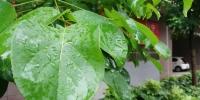 黄河以北和五地市今天下午有雨 明天开始全省逐渐迎回晴天 - 河南一百度