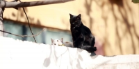 """惊呆!郑州一居民家中养百余只猫 邻居""""熏得睡不着"""" - 河南一百度"""