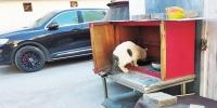 """郑州一居民家中养百余只猫 邻居""""熏得睡不着"""" - 河南一百度"""