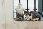 郑州一居民养猫数十只,邻居被熏难入眠!协议期限已到仍未搬离 - 河南一百度