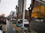 """郑州一路段26棵行道树""""秃了"""" 绿化部门:不是我们干的 - 河南一百度"""